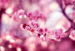 Панели с цветами